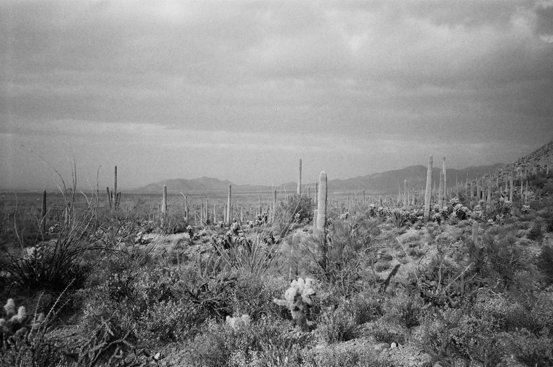 Arizona cacti black and white landscape