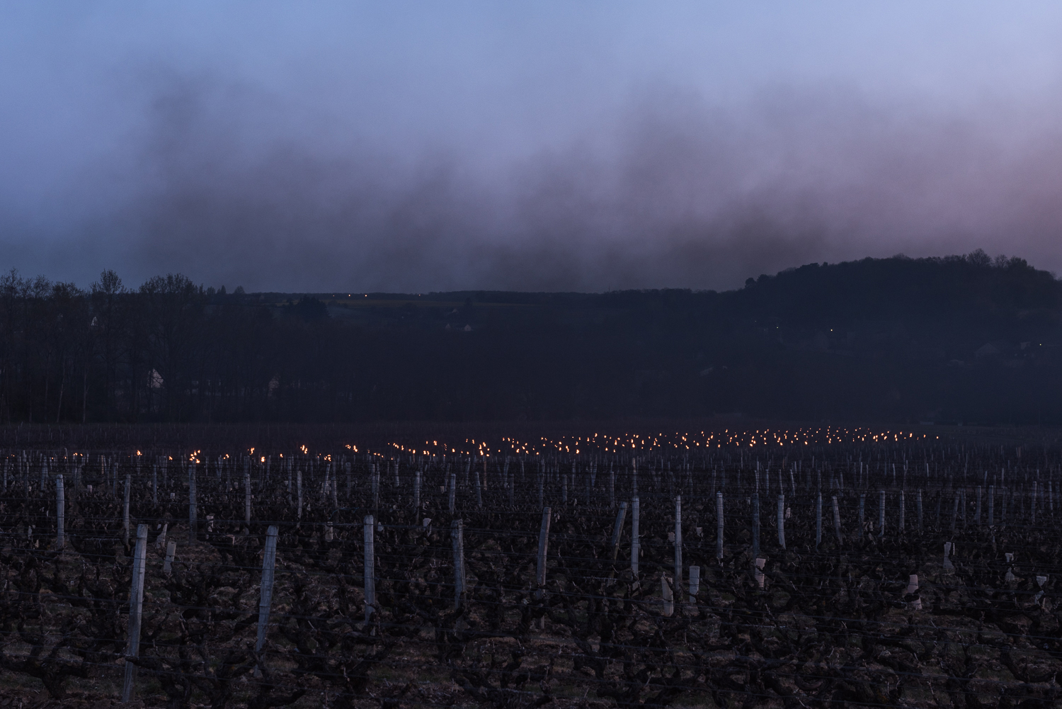 """""""Wine valley France"""""""